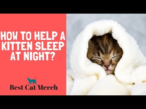 How To Help A Kitten Sleep At Night?