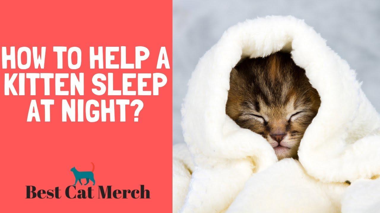 How To Help A Kitten Sleep At Night Youtube