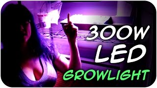 300w LED Growlight - VIPARSPECTRA Review (48)