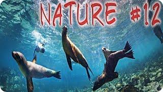 Nature #12  Галапагосские морские львы  Животные  Природа  Красивое видео  Animal videos