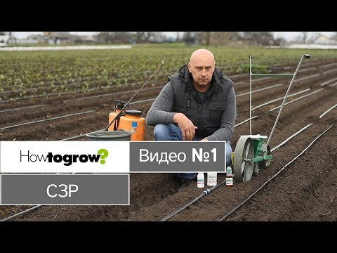 Применение гербицидов при посадке моркови и капусты