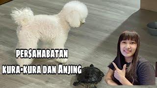 Download Persahabatan Anjing Dan Kura-kura Part 1