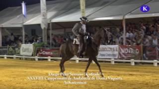 """Diego Peña Serrano caballo """"Cofrade"""" """" XXXVIII Campeonato de Andalucía de Doma Vaquera – Carmona"""