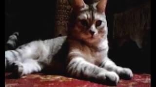 Приколы про котов и кошек - смешные истории животных