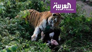تفاعلكم | فيديو مهاجمة نمر لزائر حديقة الحيوانات في الرياض والأمانة توضح