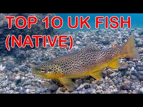 Top 10 British Freshwater Fish (Native)