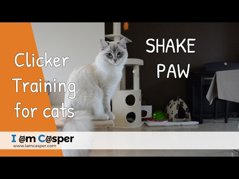 How to teach your cat shake paw - Clicker training for cats