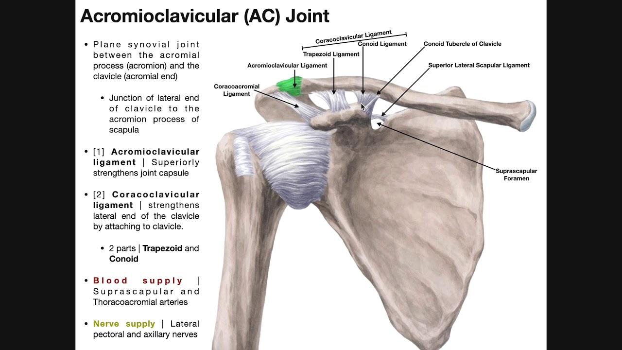 acromioclavicularis izületi arthrosis)