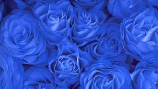 Ya Taiba Nasheed Without Music   FaceDL Download Best Videos