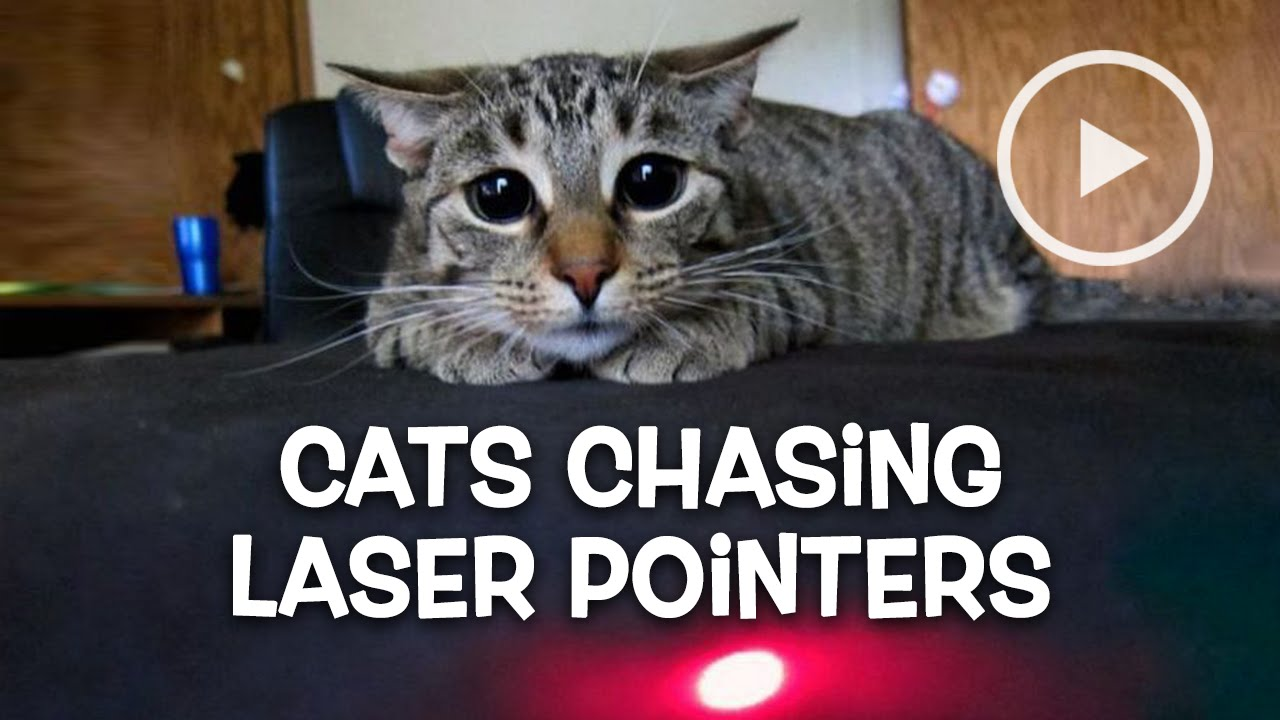 cats chasing laser pointers compilation january 2016   youtube