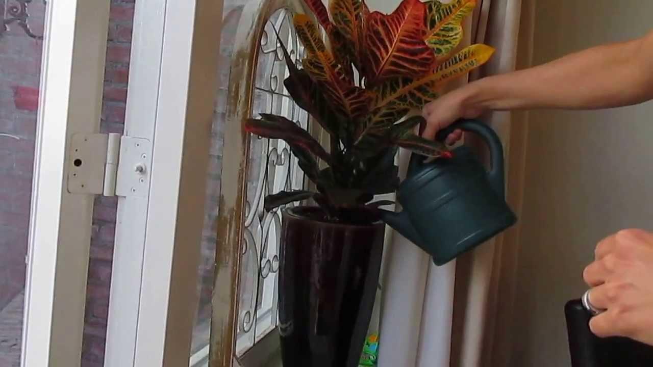 watergeven van je kamerplanten  YouTube
