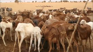 PGRN-CC: Message sur la gestion des parcours pastoraux