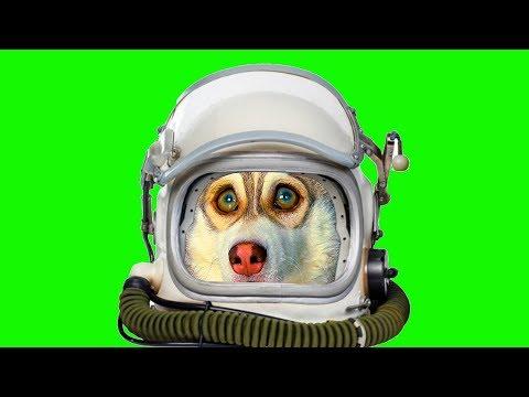 Я - КОСМОНАВТ! (Хаски Бублик) Говорящая собака Mister Booble