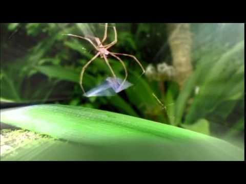 I'm a Celebrity Spider's Web Cut 2015  Ant and Dec Funny Moment