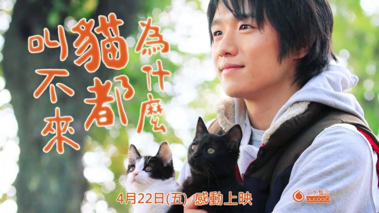 【劇情】為什麼貓都叫不來線上完整看 Neko Nanka Yondemo Kona
