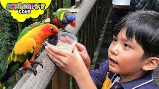 BIRD FEEDING at Jurong Bird Park, Lory Loft - Skyheart's visit in Singapore with flying animals