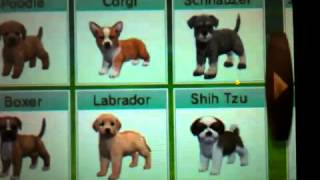 My toy poodle breeds so far