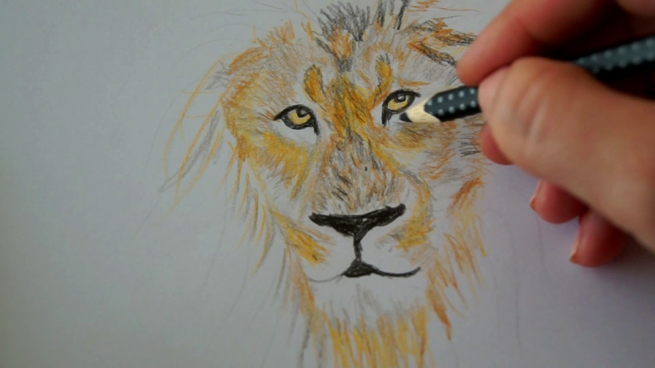l we zeichnen lernen tiere malen how to draw a lion. Black Bedroom Furniture Sets. Home Design Ideas