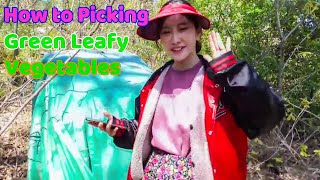 How to Picking Green Leafy Veg…