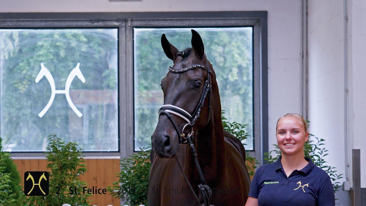 Ventes en ligne du Hanovre : un Top Price à 205.000€ et 2 chevaux vendus en France