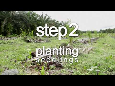 Hear & Now in Malaysia: Replanting for a Better Future