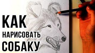 Как нарисовать собаку - рисуем собаку карандашом для начинающих
