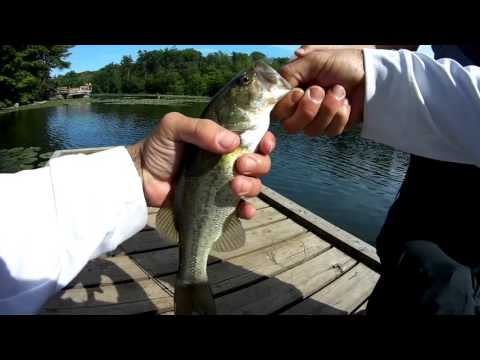 Amazing Large mouth bass fishing London, Ontario ( springwater Conservation)