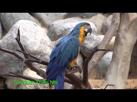 Ca Nhạc Thiếu Nhi HD 1 (Thăm vườn bách thú )