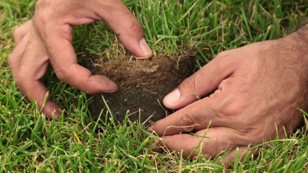 La minute 100% GAZON / Comment éliminer le feutre de votre pelouse?