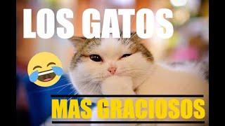 Los Gatos Mas Graciosos Del Mundo