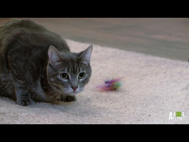 Dexter and Daisy Get the Jackson Treatment | My Cat From Hell