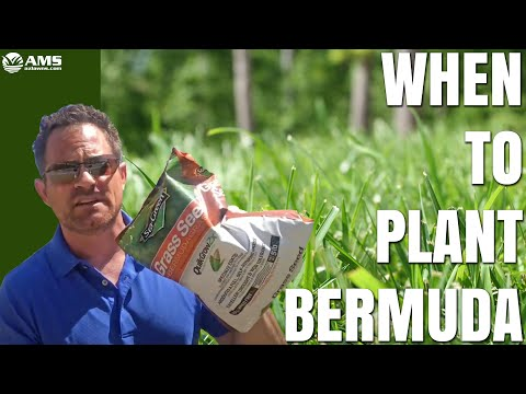 When to Plant Bermuda Grass Seed in Phoenix