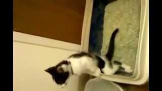 Кот писает стоя, как мужик.