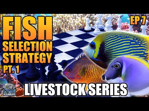 Stocking Strategy Part 1 - Picking Fish For Your Saltwater Aquarium - Livestock Series