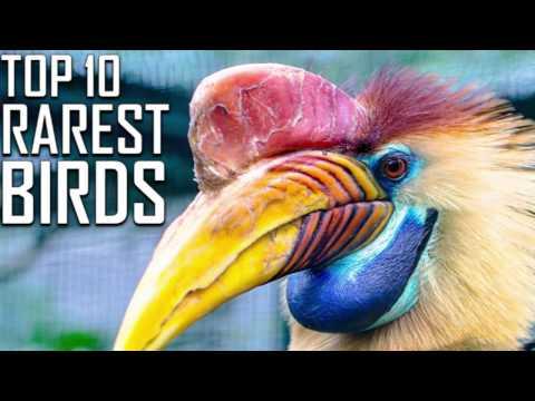 Top 10 Rarest Birds