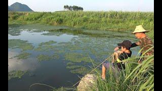 农村阿琪野塘收大铁笼,刚拉出水面小朋友就激动得大叫,看着都过瘾