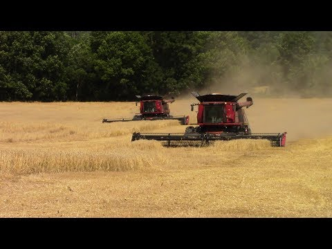 2017 Wheat Harvest Underway In May: Case IH 8240 Combines