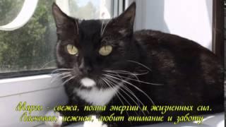 """Приют """"Второй шанс"""", г. Брянск"""