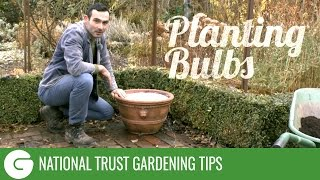 National Trust Gardening Tips: Planting Bulbs