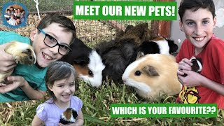 MEET OUR NEW PETS! WHICH IS YOUR FAVOURITE?