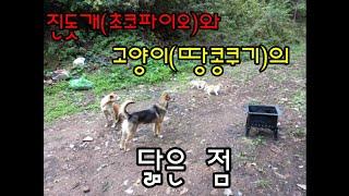 진돗개 초코파이와 고양이 땅콩과쿠키의 닮은 점.