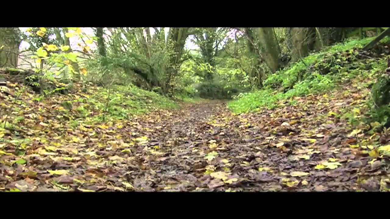 Nature's Dance Of Destruction: A Short Film About The