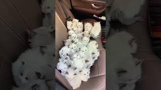 Cute kitten inside the Car seat #shorts #cats