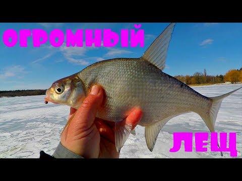 ЛЕЩ, ОГРОМНЫЙ ЛЕЩ! Тестирую прикормку от Фанатик! Зимняя рыбалка с Михалычем