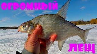 ЛЕЩ, ОГРОМНЫЙ ЛЕЩ! Зимняя рыбалка от Михалыча