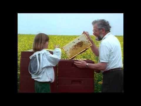 C13136   Selection of Honeybees Honey Yield & Behaviour