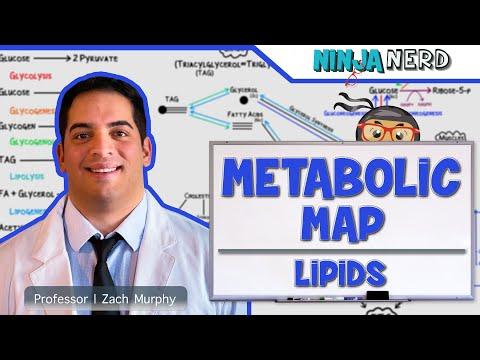 metabolism-|-the-metabolic-map:-lipids-|-part-2