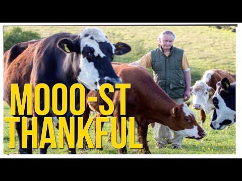 Vegetarian Cattle Farmer Donates Cows to Animal Sanctuary ft. DavidSoComedy