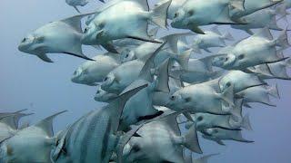 THE Aquarium bottom of the Ocean Africa in Hindi _ ANIMAL Planet _ WILD Life Hindi Documentary HD