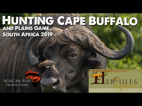 African Hunting Safari With Hercules Safaris 2019